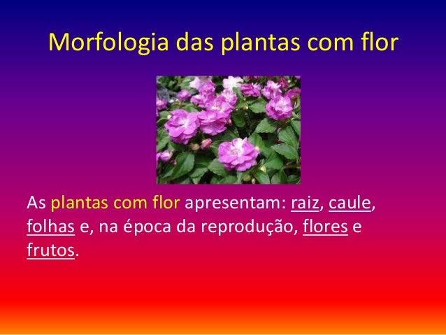 Morfologia das plantas com flor  As plantas com flor apresentam: raiz, caule, folhas e, na época da reprodução, flores e f...