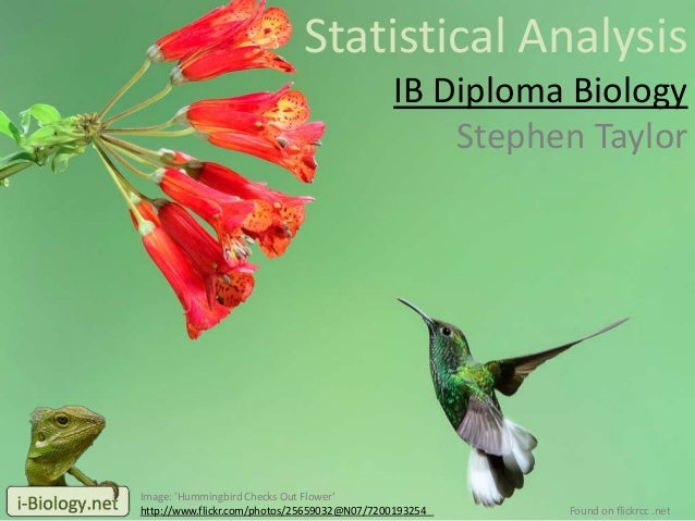 Statistical Analysis IB Diploma Biology Stephen Taylor Image: 'Hummingbird Checks Out Flower' http://www.flickr.com/photos...