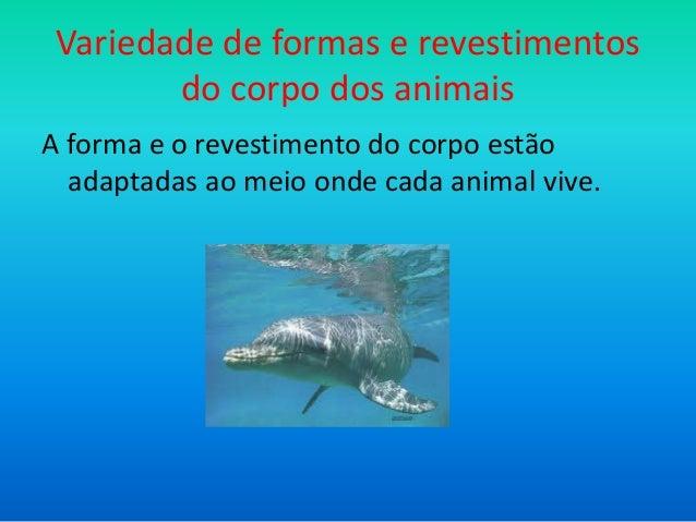 Variedade de formas e revestimentos do corpo dos animais A forma e o revestimento do corpo estão adaptadas ao meio onde ca...
