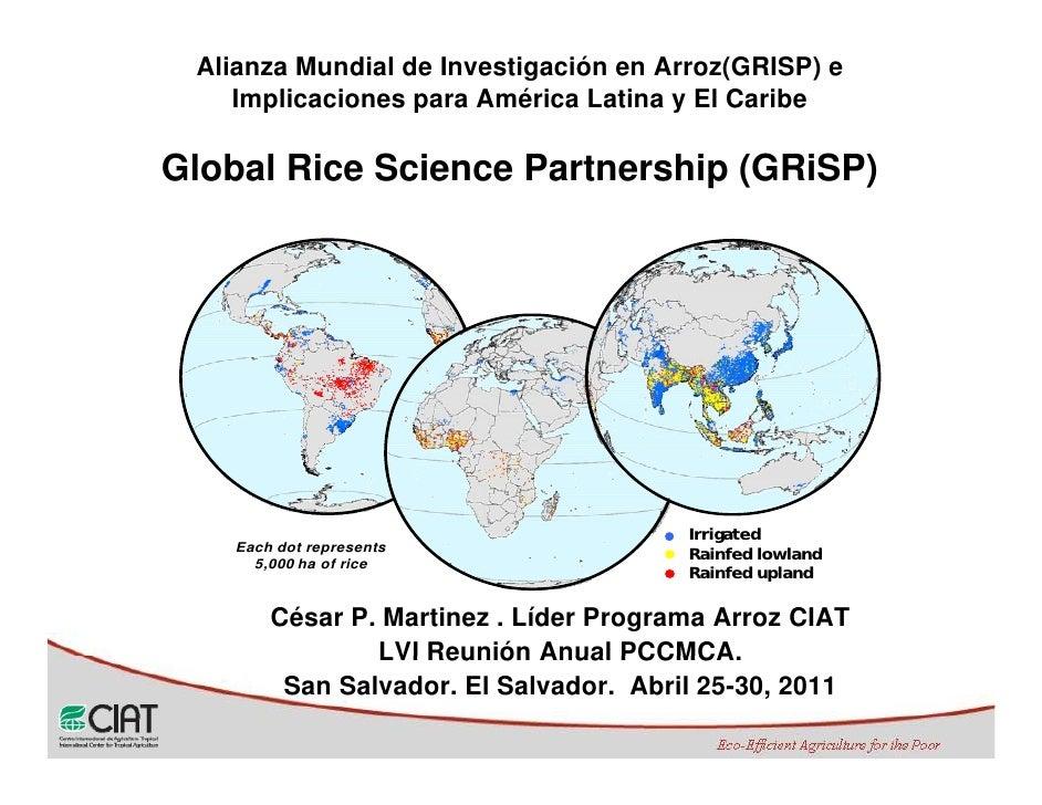 Alianza Mundial de Investigación en Arroz(GRISP) e    Implicaciones para América Latina y El CaribeGlobal Rice Science Par...
