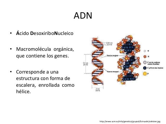 Adn Y Cromosomas