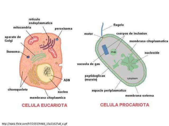Reproducción celular (parte1) Slide 3