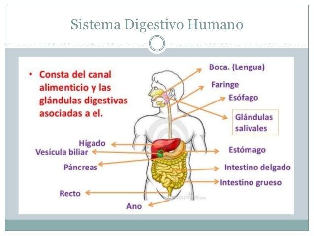 Sistemas Corporales - Nutrición y Salud