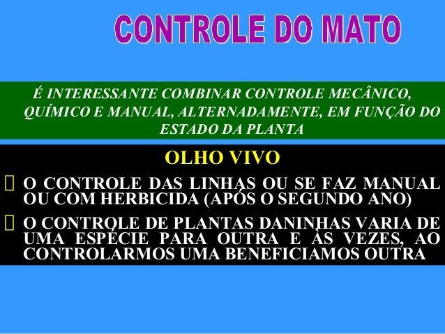 É INTERESSANTE COMBINAR CONTROLE MECÂNICO,QUÍMICO E MANUAL, ALTERNADAMENTE, EM FUNÇÃO DOESTADO DA PLANTAOLHO VIVOO CONTROL...