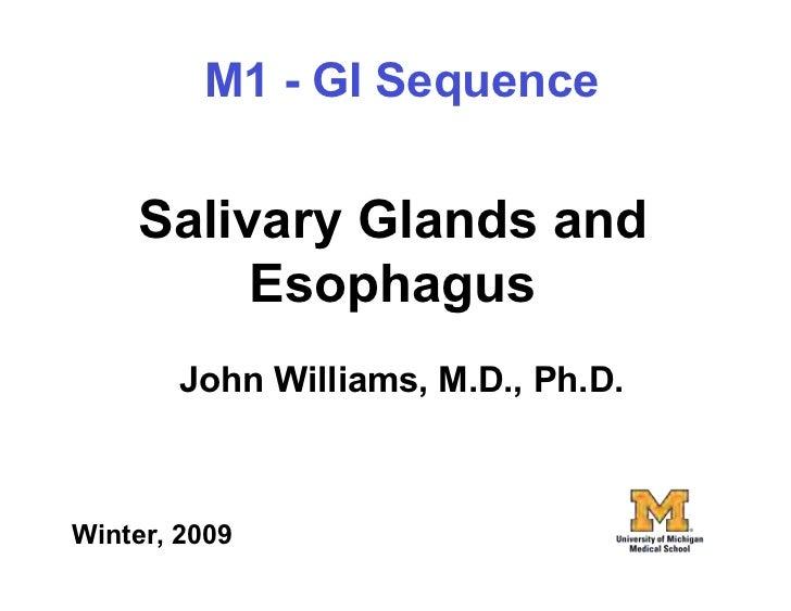01.07.09(a): Salivary Glands and Esophagus