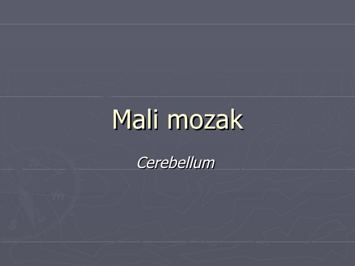 Mali mozak Cerebellum