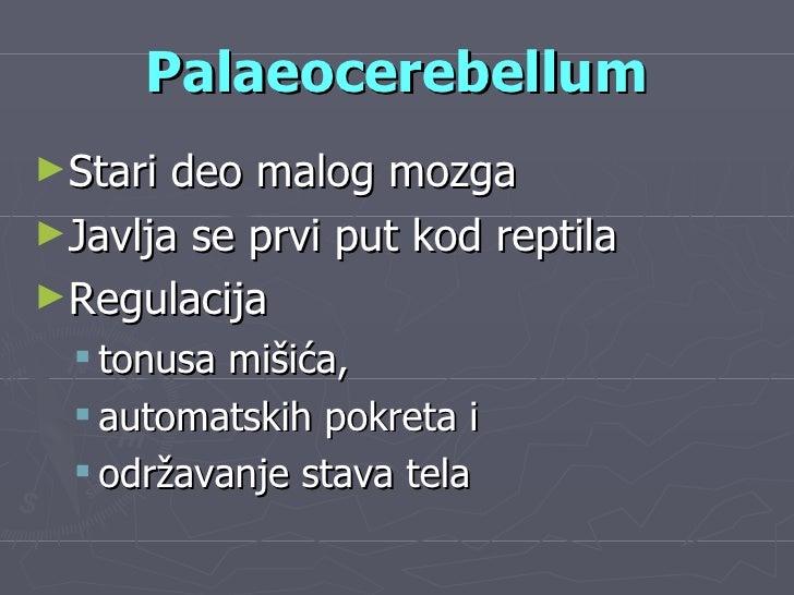 Palaeocerebellum <ul><li>Stari deo malog mozga </li></ul><ul><li>Javlja se prvi put kod reptila </li></ul><ul><li>Regulaci...