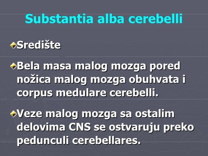 Substantia alba cerebelli <ul><li>Središte  </li></ul><ul><li>Bela masa malog mozga pored nožica malog mozga obuhvata i co...