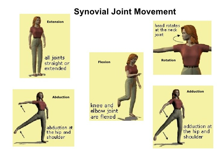 Human Skeletal System Movement And Locomotion