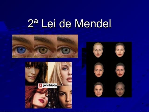 2ª Lei de Mendel2ª Lei de Mendel