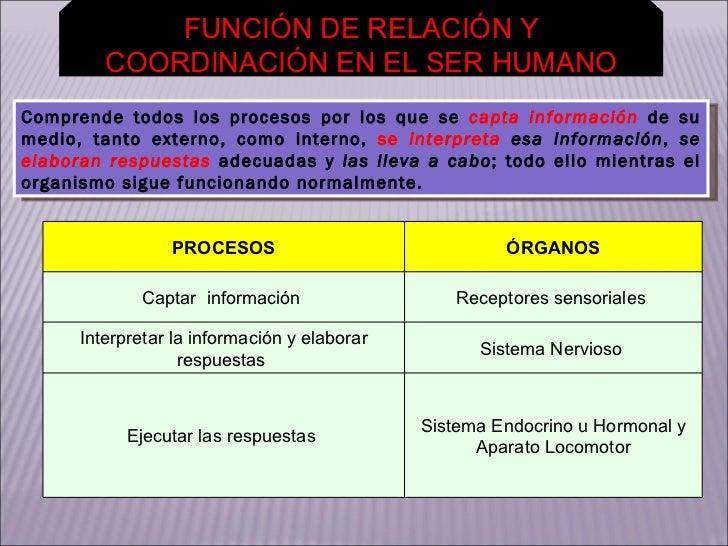 FUNCIÓN DE RELACIÓN Y COORDINACIÓN EN EL SER HUMANO Comprende todos los procesos por los que se  capta información   de   ...