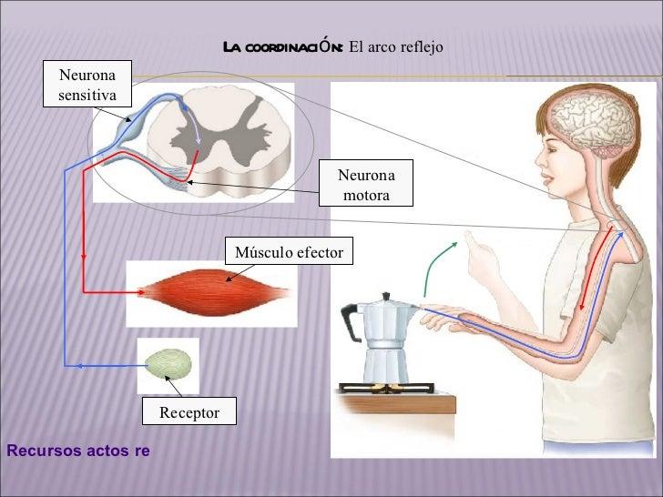 FUNCIN DE RELACIN Y COORDINACIN