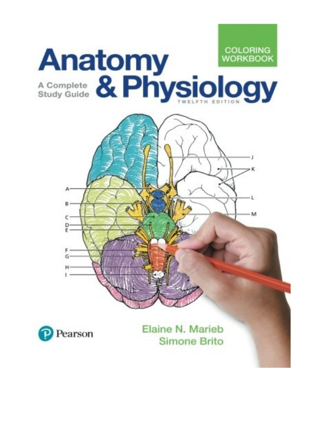 2017) Anatomy And Physiology Coloring Workbook (PDF) A Complete Stu…