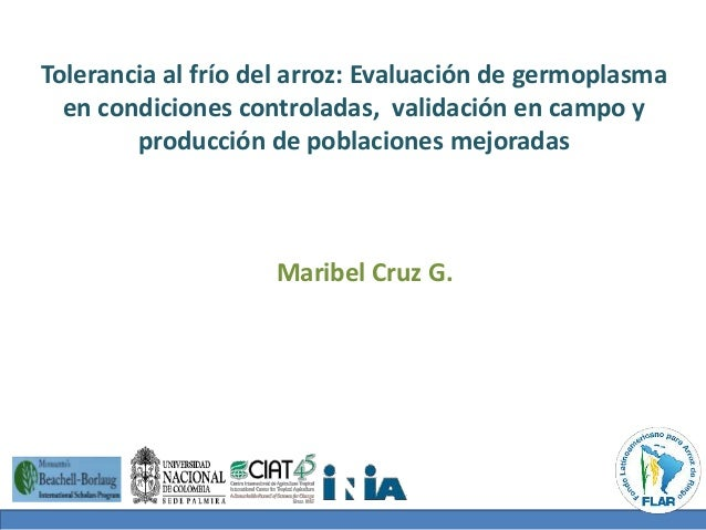 Tolerancia al frío del arroz: Evaluación de germoplasma  en condiciones controladas, validación en campo y  producción de ...