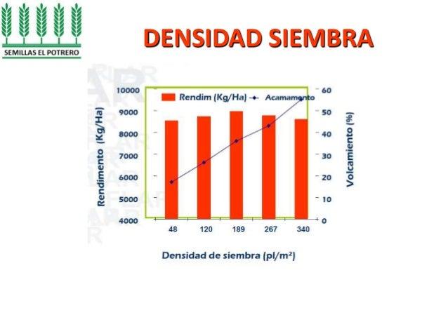 Manejo agron mico en cultivo de arroz hacienda el potrero for Densidad de siembra de tilapia