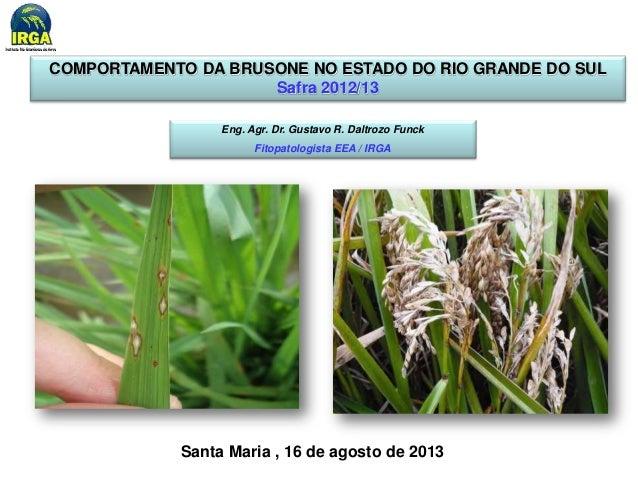 COMPORTAMENTO DA BRUSONE NO ESTADO DO RIO GRANDE DO SUL  Safra 2012/13  Eng. Agr. Dr. Gustavo R. Daltrozo Funck  Fitopatol...