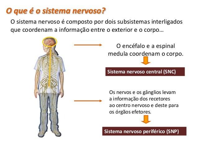 Constituição do sistema nervoso • O sistema nervoso divide-se em:   – Sistema Nervoso Central (SNC)   Constituído pelos ce...
