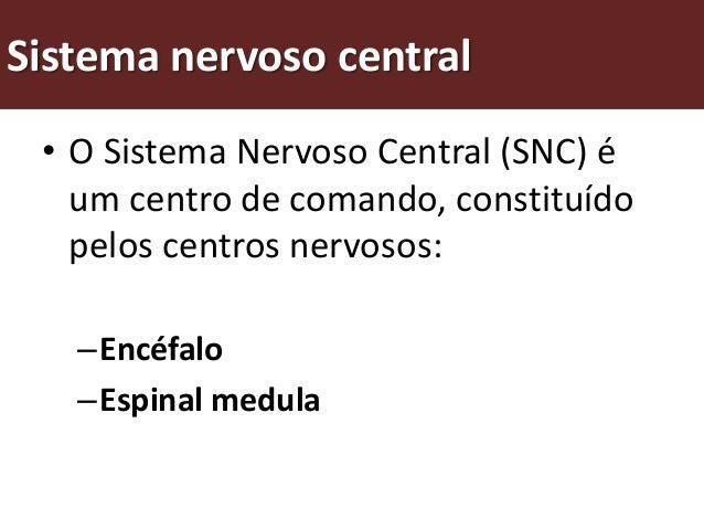 Como funciona o sistema nervoso central? O sistema nervoso central coordena todas as actividades do corpo.   é formado por...