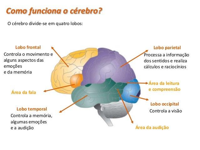 Sistema Nervoso Periférico (SNP) • O Sistema Nervoso Periférico (SNP) liga o   Sistema Nervoso Central (SNC) ao resto do  ...