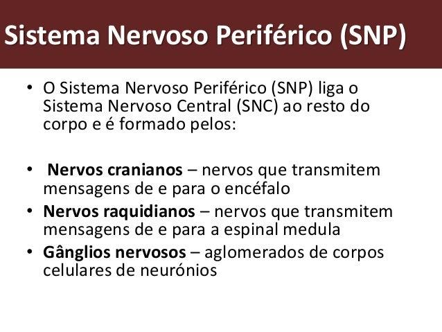 Como é formado o sistema nervoso periférico?          Nervos cranianos                           Nervos raquidianos       ...