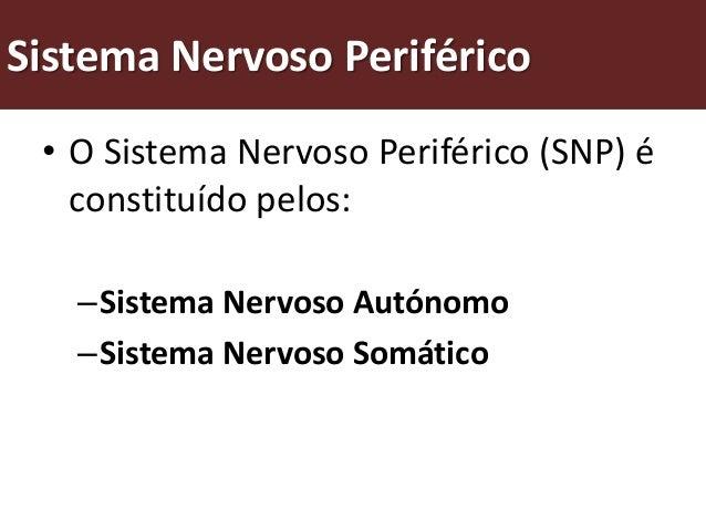 Como funciona o sistema nervoso periférico?    Sistema nervoso              Sistema nervoso                  Sistema nervo...