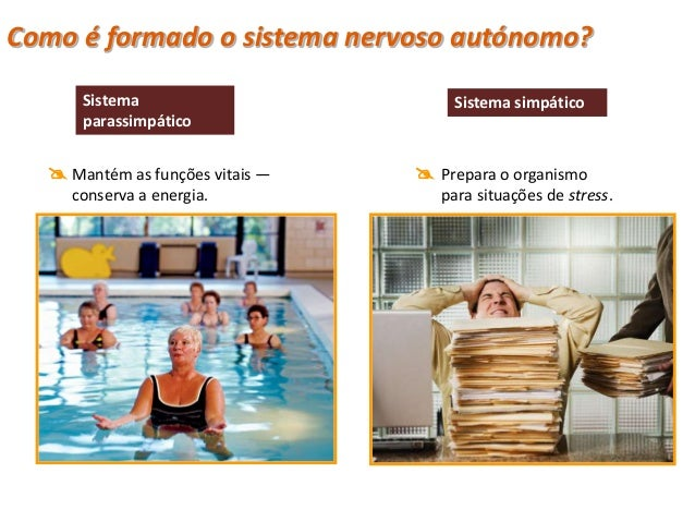 Sistema Nervoso Periférico                         Nervos cranianos                                            Sistema Ner...