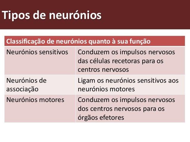 O que é o sistema neuro-hormonal?Existem vários órgãos envolvidos na captação e transmissão de estímulose na elaboração de...