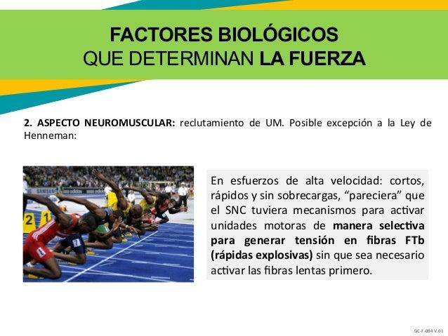 01b factores determinantes de la fuerza