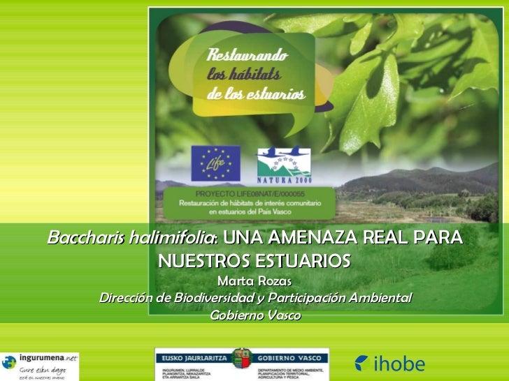 Baccharis halimifolia : UNA AMENAZA REAL PARA NUESTROS ESTUARIOS Marta Rozas Dirección de Biodiversidad y Participación Am...