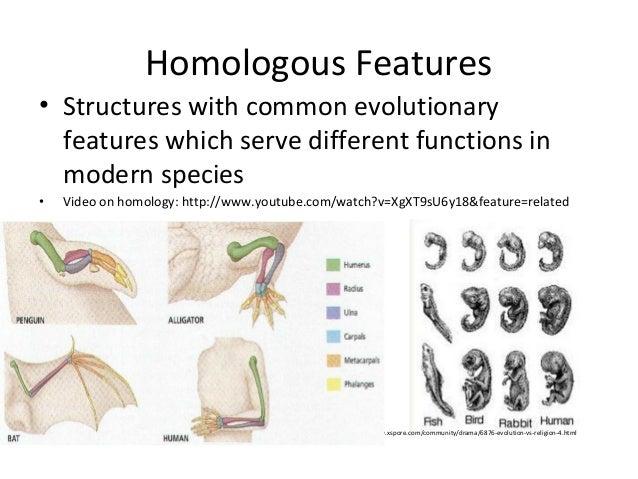 01b evidence of evolution 74 – Evidence of Evolution Worksheet