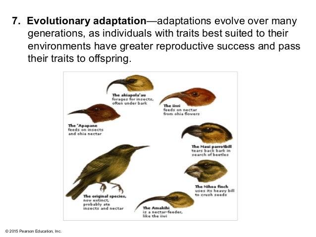animal adaptation definition - photo #13