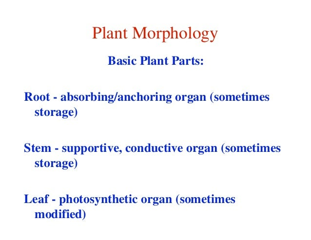 Plant Morphology               Basic Plant Parts:Root - absorbing/anchoring organ (sometimes storage)Stem - supportive, co...