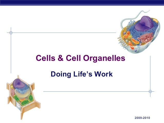 AP Biology 2009-2010 Cells & Cell Organelles Doing Life's Work