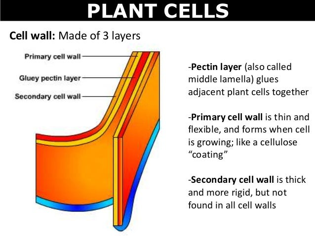 01 Cell Structures