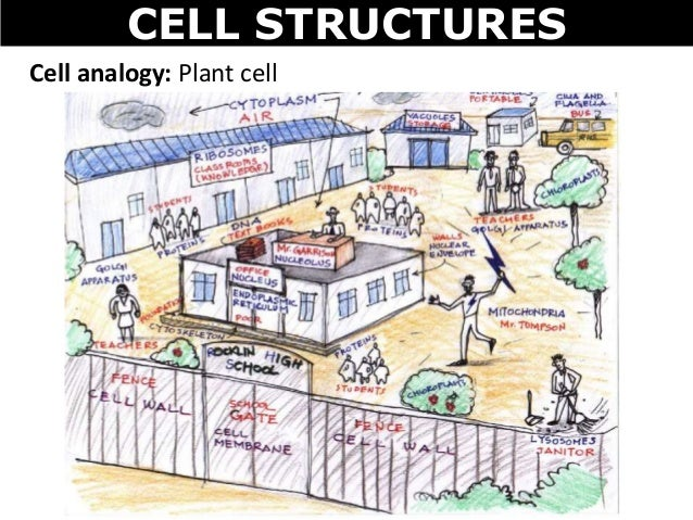 Animals For Animal Cell Analogy Examples Ideas Animalsmix