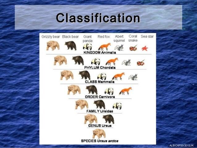 Classification                 ALBIO9700/2012JK