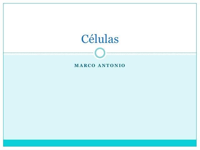 Células MARCO ANTONIO