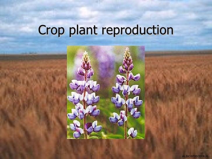 Crop plant reproduction                          ALBIO9700/2006JK