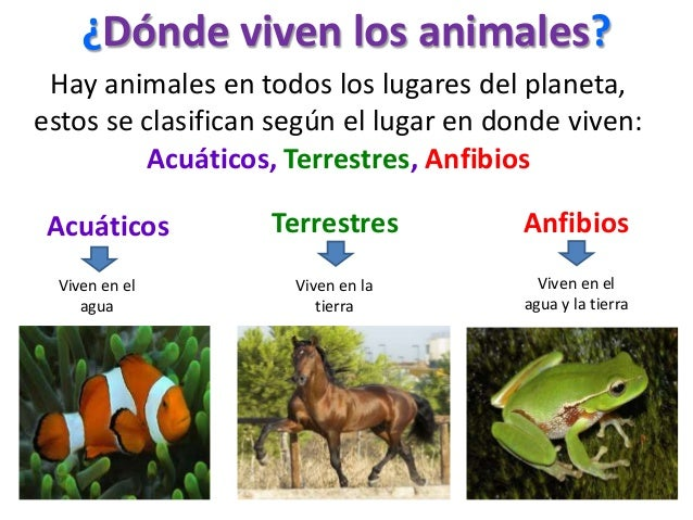 ¿Dónde viven los animales?Hay animales en todos los lugares del planeta,estos se clasifican según el lugar en donde viven:...