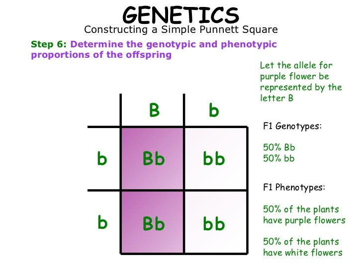 Genotype And Phenotype Punnett Square | www.imgkid.com ...