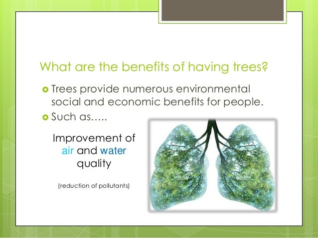 What are the benefits of having trees? Trees provide numerous environmentalsocial and economic benefits for people. Such...