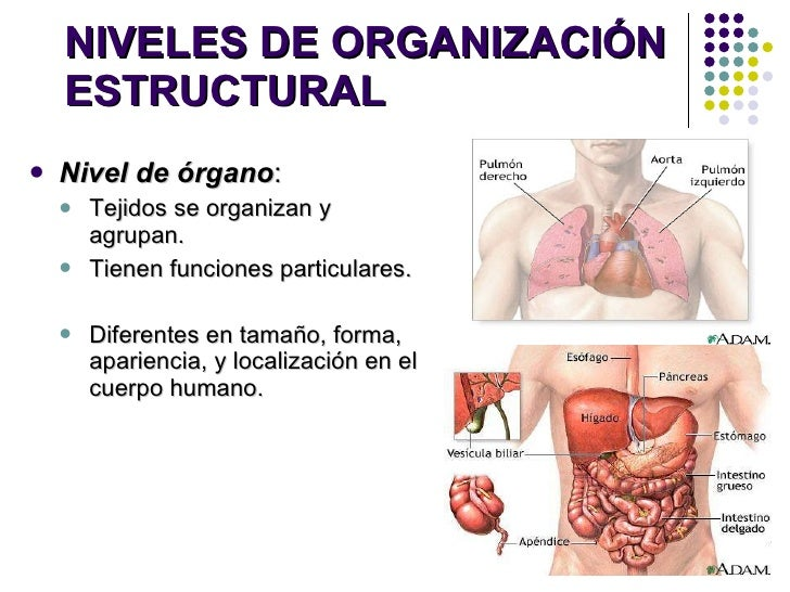 01) introduccion a la anatomia
