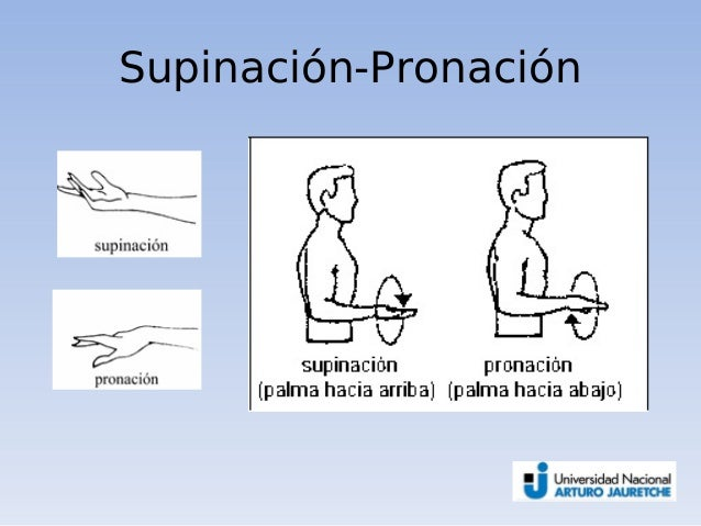 01 introduccion a la anatomia