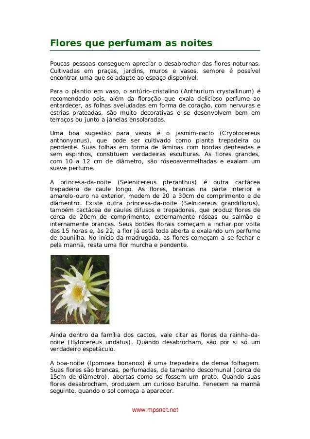 www.mpsnet.net Flores que perfumam as noites Poucas pessoas conseguem apreciar o desabrochar das flores noturnas. Cultivad...