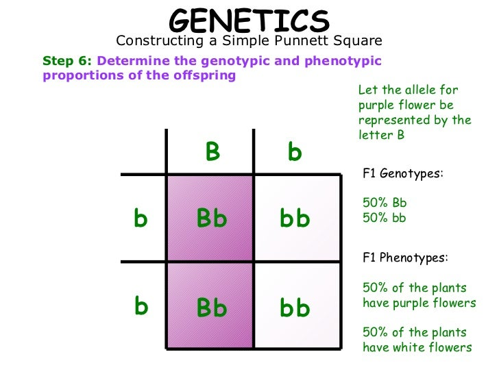 Genotype And Phenotype Examples Choice Image Example Cover Letter
