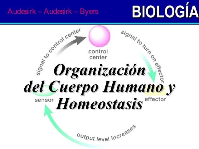 BIOLOGÍABIOLOGÍA OrganizaciónOrganización del Cuerpo Humano ydel Cuerpo Humano y HomeostasisHomeostasis Audesirk – Audesir...