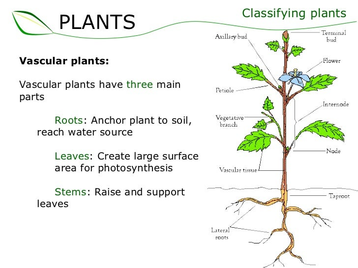 01 plants part 1 (slideshare)