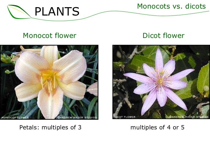 01 plants part 1 (slideshare) 10 Examples Of Monocot Plants