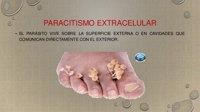 Microbiota transitoria y permanente