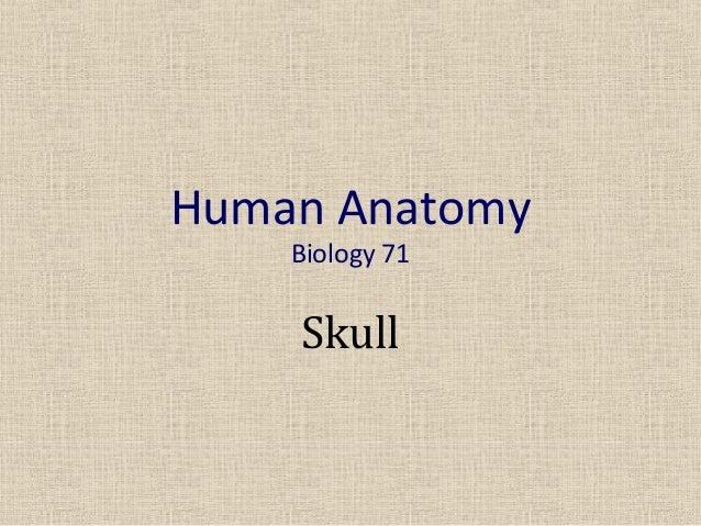 Human Anatomy    Biology 71    Skull